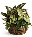 Emerald Garden Basket Plants