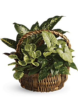 Emerald Garden Basket Basket Arrangement