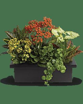 Arrangement floral Assortiment élégant de plantes
