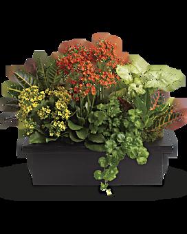 Stylish Plant Assortment Flower Arrangement