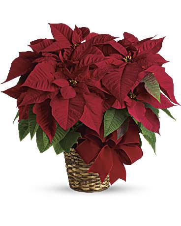 Red Poinsettia Bouquet Teleflora