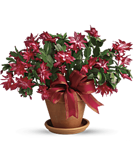 Give a Holiday Gift Basket or Plant this Christmas | Teleflora