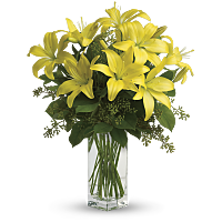 Lily Flower Meaning & Symbolism | Teleflora