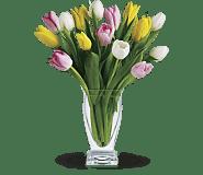 Teleflora's Tulip Treasure
