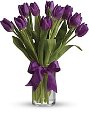 Passionate Purple Tulips Flowers
