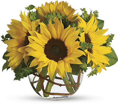 Shop for Sunflowers