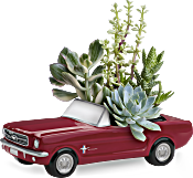 Dream Wheels '65 Ford Mustang by Teleflora Plants
