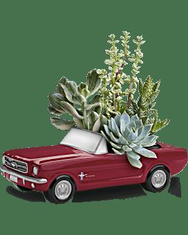 Plante Roues de rêve Ford Mustang 65 de Téléflora