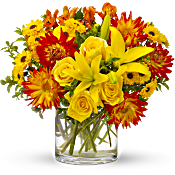 Summer Samba Flowers