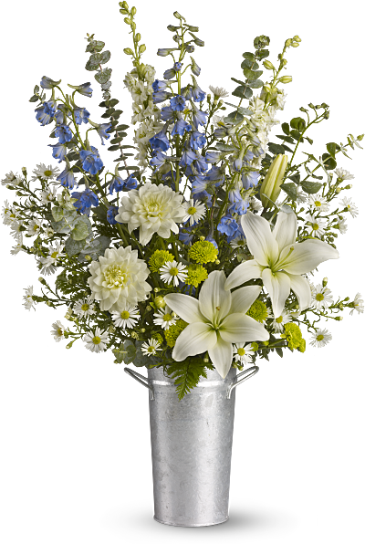 Shop for Larkspur / Delphinium