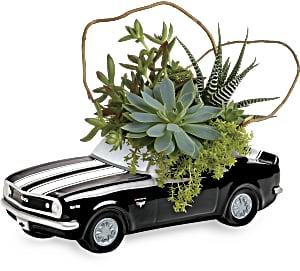 Teleflora's Chevy Camaro Plant Garden