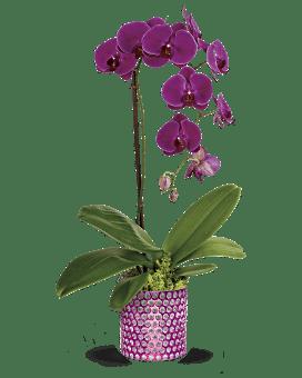 usine de de Teleflora éblouissant orchidée