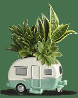 Teleflora's Cool Camper Succulent Garden