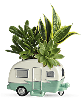 Teleflora's Cool Camper Succulent Garden Plant