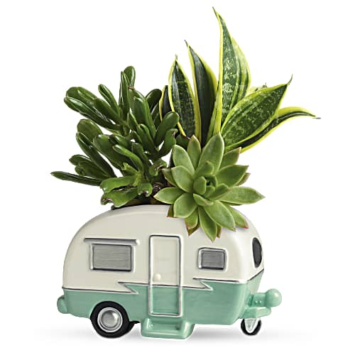 Shop our Father's Day Cool Camper Succulent Garden