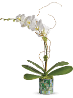 Teleflora's Stained Glass Orchid