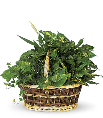 Large Basket Garden Plants