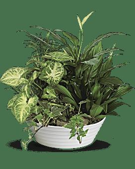 Medium Dish Garden Flower Arrangement