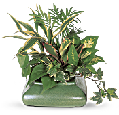 Small Garden Dish Plants