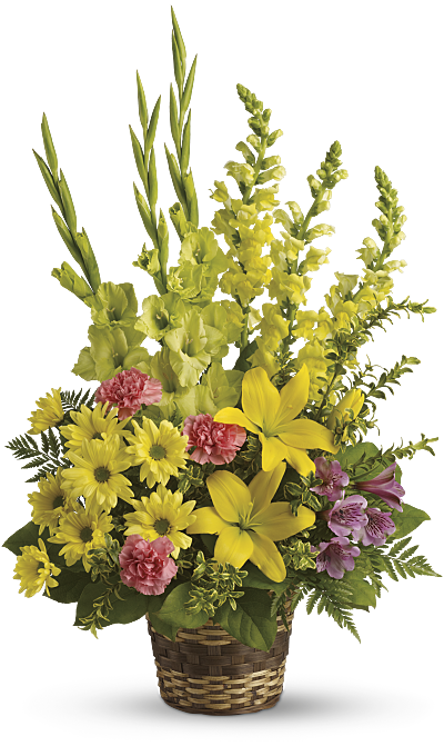Shop for Snapdragons