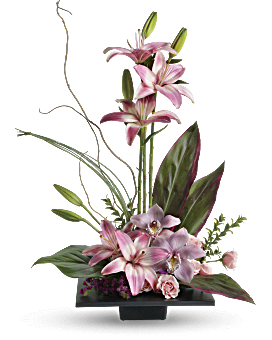 Imagination Blooms With Cymbidium Orchids Flower
