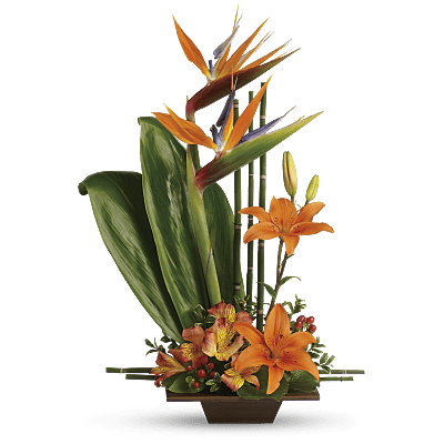 bird of paradise flower meaning symbolism teleflora