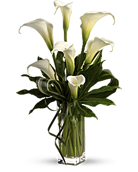 Who's the fairest of them all? Elegant callas, without a doubt. The graceful white flowers are accented with Zen greenery in a tall glass vase for a modern, romantic arrangement. White Bouquets - My Fair Lady By Teleflora - White - Flower Delivery