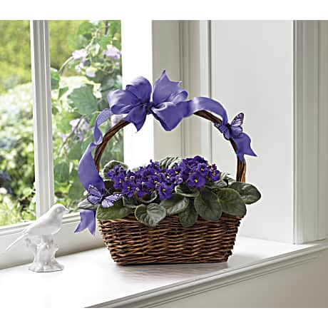 Violets and butterflies plant teleflora negle Choice Image