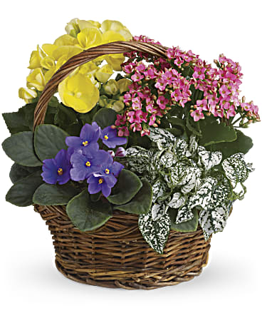 Image Of Spring Has Sprung Mixed Basket With SkuT93 1A