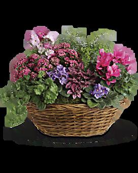 Arrangement floral Panier de plantes mélangées Simplement chic