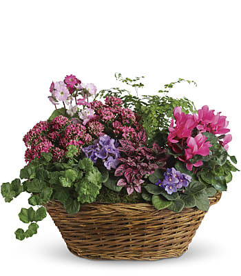 Simply Chic Mixed Plant Basket Plants