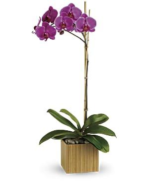 Teleflora violet impérial orchidée