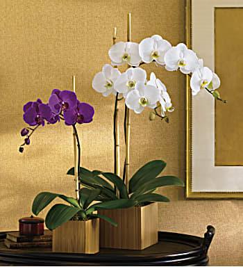 Teleflora's Imperial Purple Orchid bouquet flower arrangement