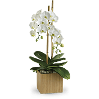 Orchid flower meaning symbolism teleflora shop for orchid mightylinksfo