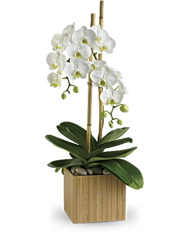 Orchid Flower Meaning Symbolism Teleflora