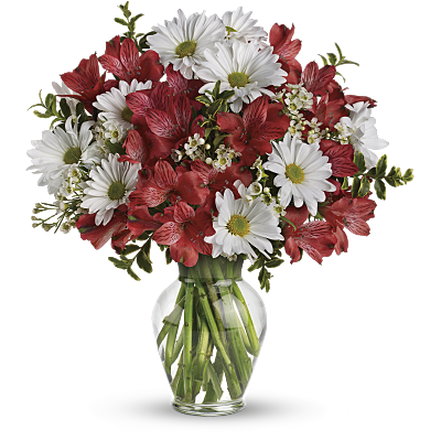 Shop for Alstroemeria