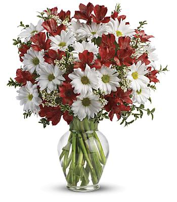 Dancing in Daisies Flowers