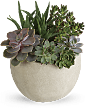 Desert Beauty Succulent Garden Plants