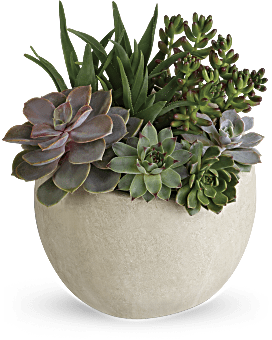 Usine succulente de jardin de beauté de désert