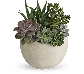 Order a beautiful Desert Beauty Succulent Garden arrangement
