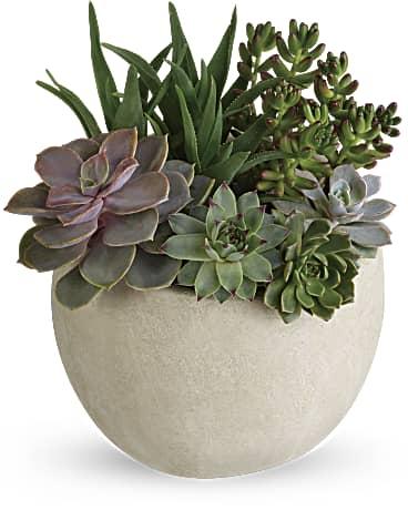 Desert Beauty Succulent Garden Plant Teleflora
