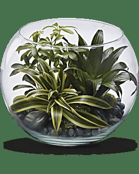 Sphere Of Tranquility Terrarium Plant