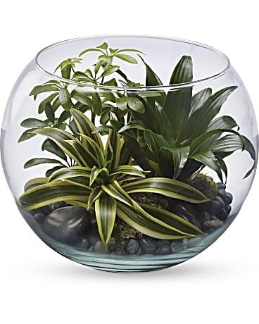 Sphere Of Tranquility Terrarium Plant Teleflora