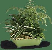 Forever Green Plant Garden Plants