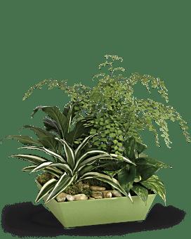 Forever Green Plant Garden Plant
