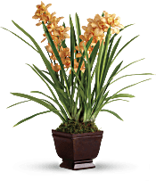 Teleflora's Regally Yours Orchid Plants