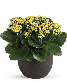 Best-Selling Plants are Quick & Easy to Order | Teleflora on sympathy plant, hostess plant, valentine plant, beach plant, baby plant, holiday plant, mothers day plant, best housewarming plant, love plant, chocolate plant, funeral plant, moving plant, office plant, thank you plant, home plant, flowers plant, super mario bros piranha plant, welcome plant, rose plant, good luck plant,