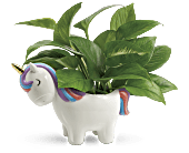 Teleflora's Peaceful Unicorn Pothos Plant, picture