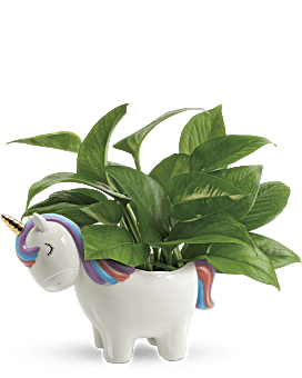Teleflora's Peaceful Unicorn Pothos Plant Bouquet