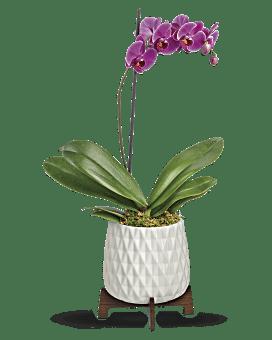 Teleflora's Architectural Orchid Plant Bouquet